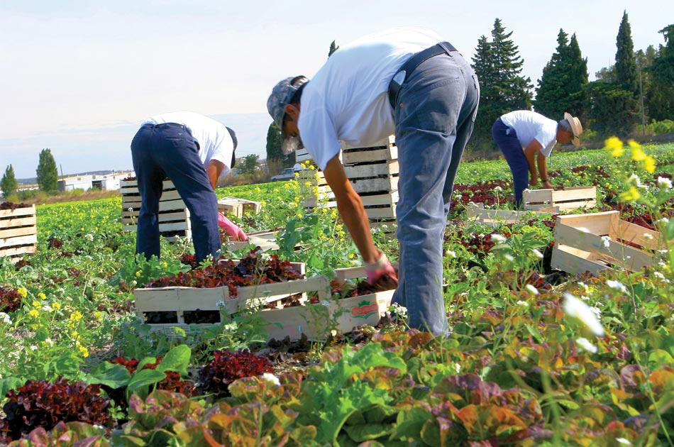 Récolte de fruits et légumes bio à Provenchères-et-Colroy